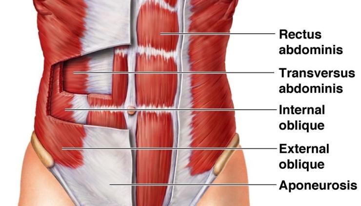 abdominal-muscles.jpg