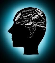 The Brain.jpg